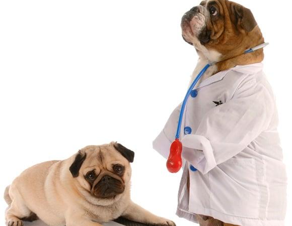 ser-veterinário-vocação-ou-negócio