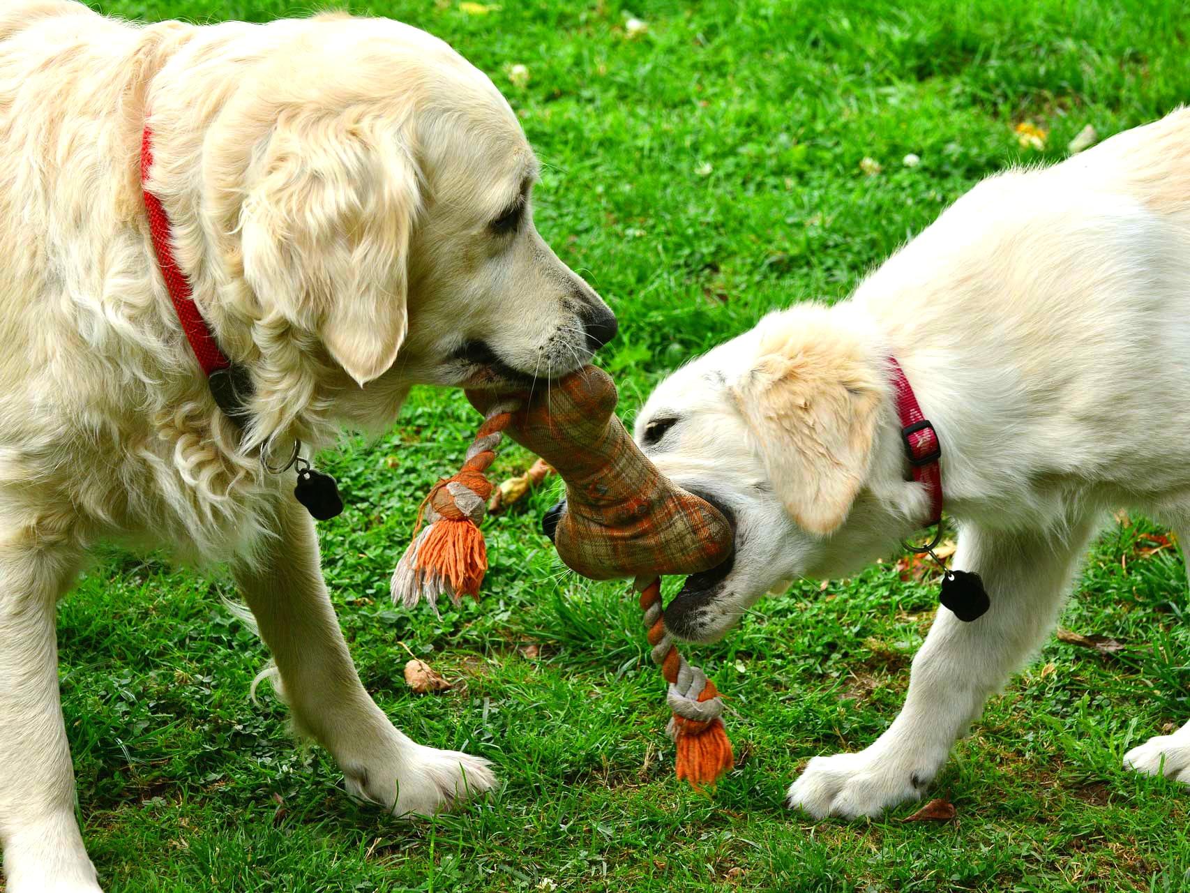 jardim-cachorros
