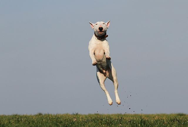 cachorro-pulando