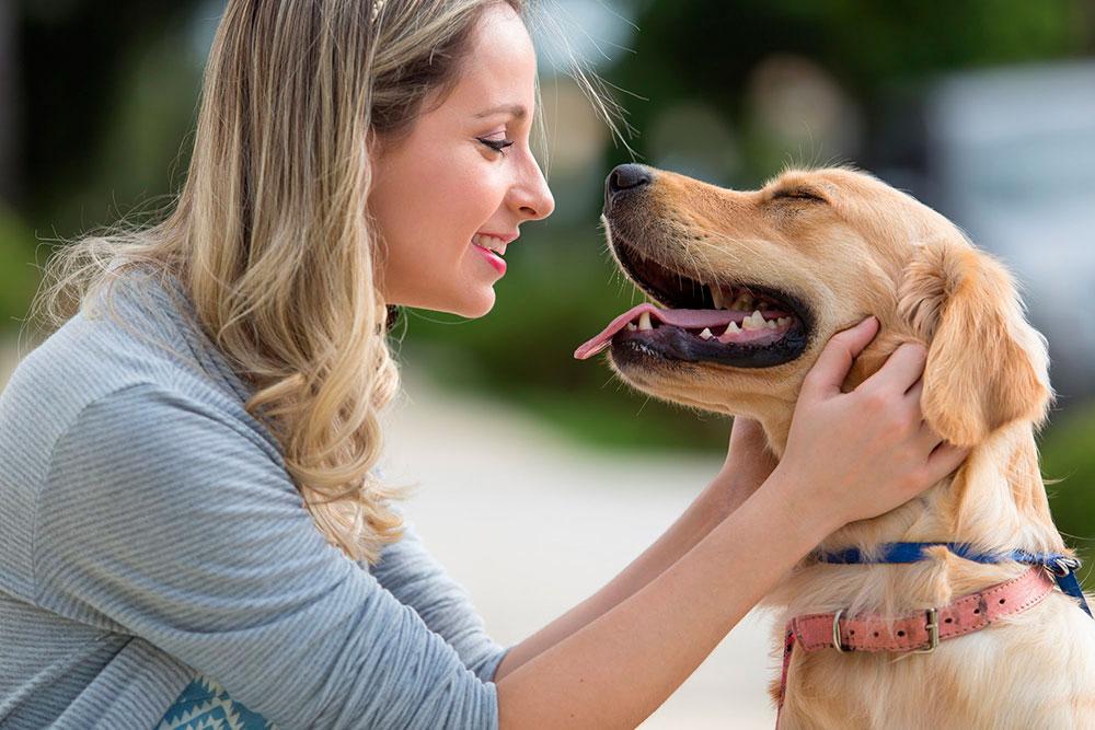 Como-aumentar-a-produtividade-de-sua-clínica-ou-hosp-veterinario