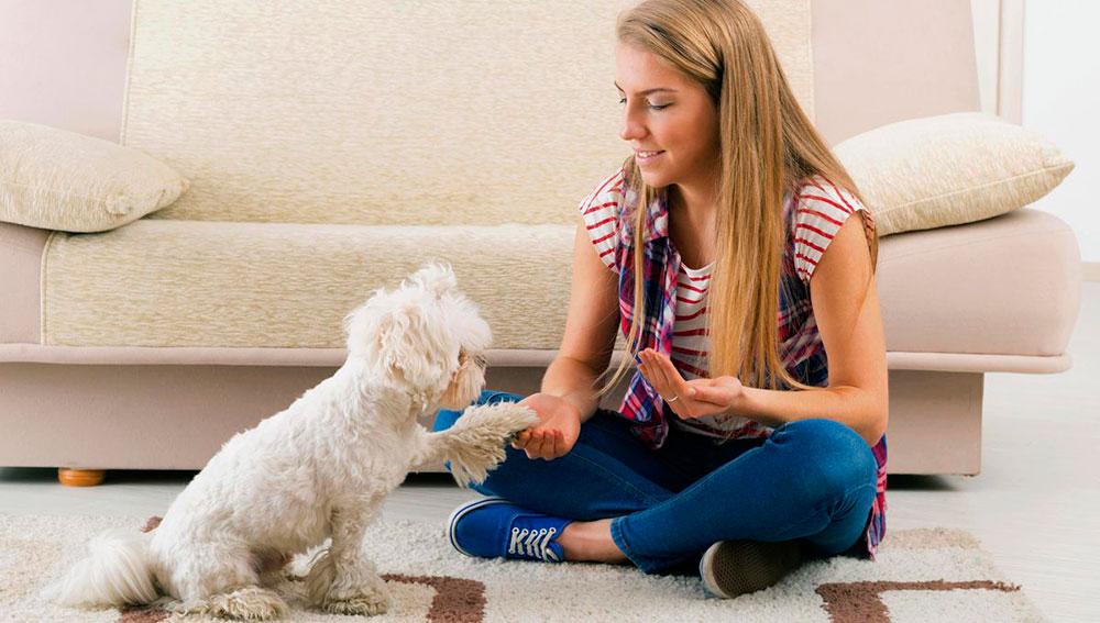 treinamento-para-animais-e-donos