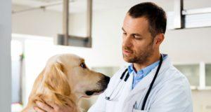 divulgar-clinica-veterinaria
