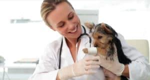 como-atrair-clientes-para-clinica-veterinaria