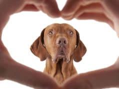 Marketingpara-clínica-veterinária