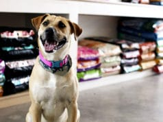 como-vencer-a-concorrencia-pet-shop